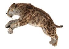 Big Cat Smilodon Royalty Free Stock Photos