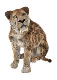 Big Cat Smilodon Stock Photo