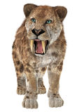 Big Cat Smilodon Stock Photos