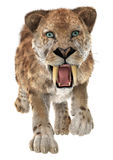 Big Cat Smilodon Stock Photography