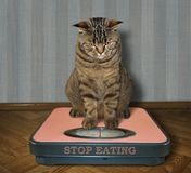 Cat on a bathroom scale 2 Royalty Free Stock Photos