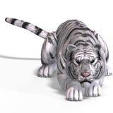 Big Cat White Tiger Royalty Free Stock Photos