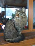 Big cat in the window. In Bansko Royalty Free Stock Photography