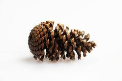 Big cedar pine cone isolated on white background Royalty Free Stock Image