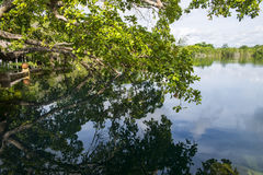 Big cenote Royalty Free Stock Photography