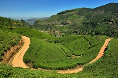 Sri Lanka, green Tea plantation Royalty Free Stock Images