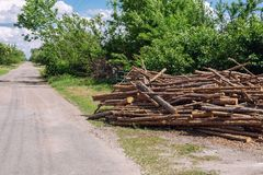 Big chaotic heap of pine wooden logs stocked near rural road at country village. Hardwood preparation and storage for future. Winter tree nature forest cut royalty free stock photography