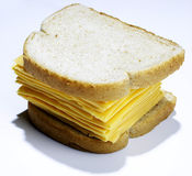 Big cheese sandwich. Wheat bread stuffed with many many slices of processed chedder cheese a very cheesy sandwich royalty free stock photo