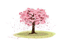 Big Cherry tree Stock Photography