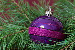 Big Christmas  purple bauble and fir branches Royalty Free Stock Photos