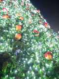 big christmas tree Στοκ Εικόνα