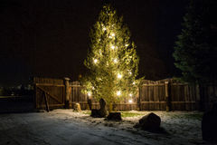 Big christmas tree decorated by lights at night Royalty Free Stock Image