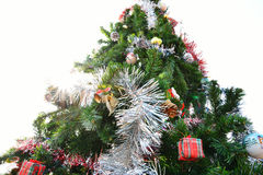 Big christmas tree Stock Photo