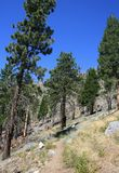 Big Cienega Trail. Trail through pines on a mountain side, California Stock Image