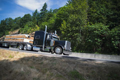 Big classic rig semi truck carry lumber on flat bed trailer Stock Photography