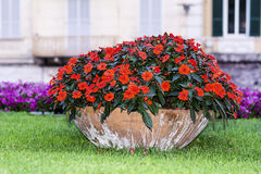 Big clay pot with red flowers in Sanremo,Italy. Big clay pot with red flowers in a green garden in Sanremo,Italy Royalty Free Stock Photo