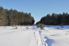 Big clearing with ski track in winter forest Royalty Free Stock Photos