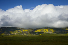 Big cloud over wild-flower covered Temblor Range Stock Photography