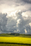 Big clouds over field of canola Royalty Free Stock Photography