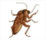 Big cockroach Royalty Free Stock Photography
