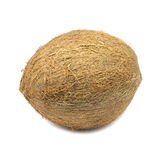 Big coconut Royalty Free Stock Image