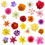 Big collage from  flowers Royalty Free Stock Images