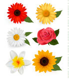 Big collection of beautiful colorful flowers. Stock Images