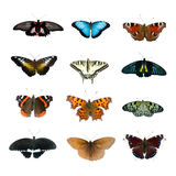 Big collection of butterflies Stock Photo