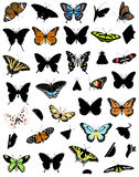 The big collection of butterflies Stock Image