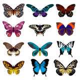 Big collection of colorful butterflies. Butterflies isolated on white. Vector illustration Royalty Free Stock Images