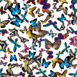 Big collection of colorful butterflies. Butterflies  on white. Vector illustration Royalty Free Stock Photo
