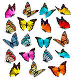 Big collection of colorful butterflies. Royalty Free Stock Photography