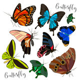 Big collection of colorful butterflies. Stock Images