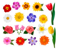 Big collection of colorful flowers. Stock Photos
