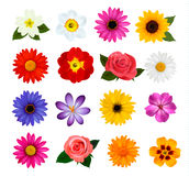 Big collection of colorful flowers. Royalty Free Stock Photos