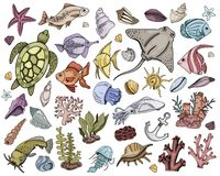 Vector seashells Set vector illustration