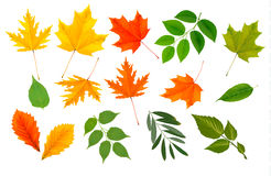 Big collection of colorful leaves. Royalty Free Stock Photo