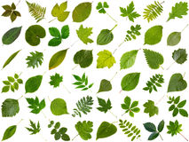 Big collection of different green leaves Royalty Free Stock Photo