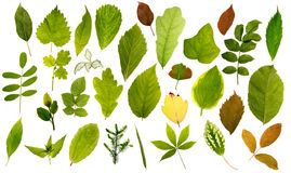 Big collection of different leafs Stock Photo
