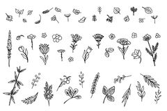 Set with different plants. Big collection of flowers and plants. Used for various types of design. Linear style. Vector illustration Stock Images