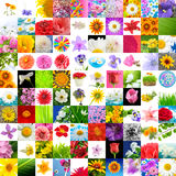 Big Collection of Flowers (Set of 100 Images) Royalty Free Stock Image