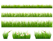 Big collection of green grass. Royalty Free Stock Photos