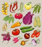 Big collection of hand-drawn vegetables, vector Stock Photo