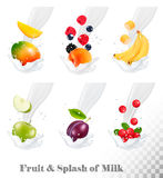 Big collection of icons of fruit and berries in a milk splash. Royalty Free Stock Photos