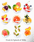 Big collection icons of fruit in a milk splash. Stock Images