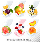 Big collection icons of fruit in a milk splash. Guava, plum, mango, blackcurrant, strawberry, cherry, blueberry, peach. Vector Set Stock Images