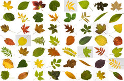 Big collection of leaves Stock Photo