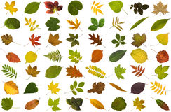Big collection of leaves Stock Photography