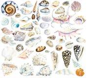Shells. Watercolor hand drawn illustration royalty free illustration