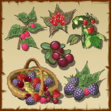 Big collection of red ripe delicious berries Royalty Free Stock Image